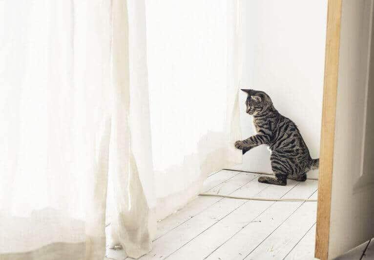 Így óvhatod meg a lakásod és a bőröd épségét a cicád karmaitól