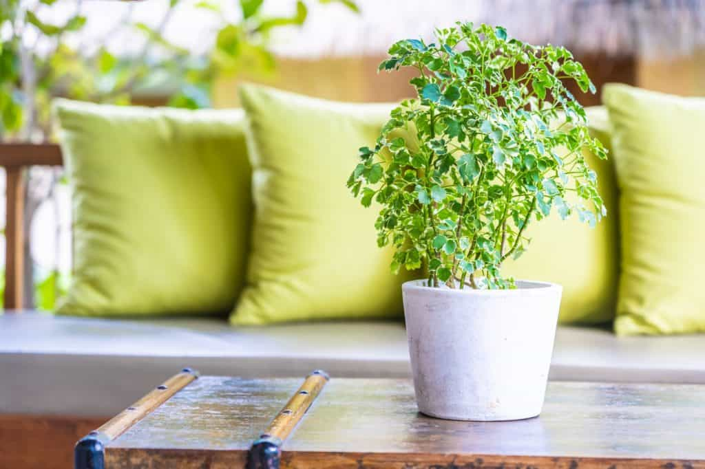 Vase plant on table decoration with pillow on sofa chair
